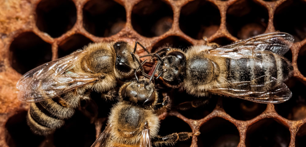 Pesticide Residue Found in 75% of Honey